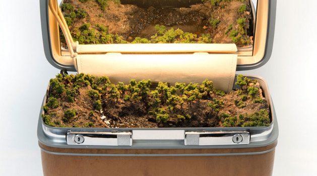 Krajiny pro cestovatele: úchvatný miniaturní ekosystém ukrytý v ručních kufrech